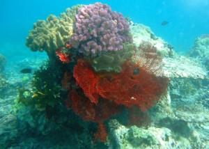 Korallengärten