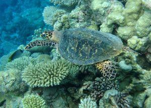 Unterwasser-Freunde