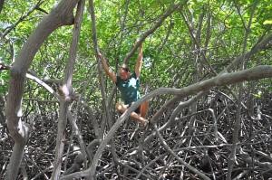 Edwin, der Mangrovenkletterer