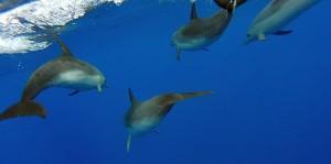 ... oder manchmal auch Delphine