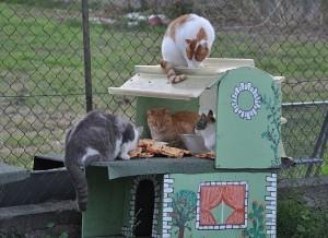 sogar italienische Katzen lieben Pizza
